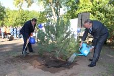 Посадка деревьев в Пскове в ознаменование Дня Европейского Сотрудничества 2013 в России.
