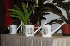 Sangaste Polka, новый зимний сад и совместные мероприятия по уборке отметили Европейский день сотрудничества в замке Сангасте, Эстония