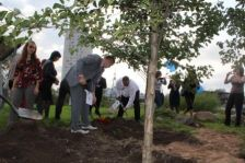 For greener Programme territory - Friendship Alley in the center of Tartu City (Estonia)